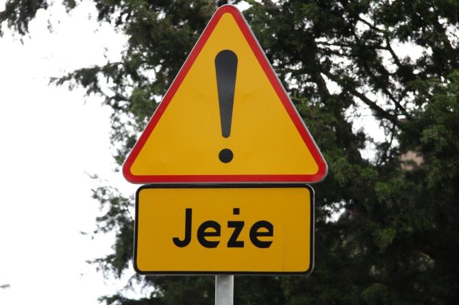 Nawet pozornie niegroźne i małe zwierzę może spowodować zagrożenie na drodze. Nie ignorujmy znaków ostrzegających przed możliwością wtargnięcia zwierząt na drogę.